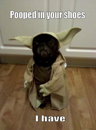 Йода это собака